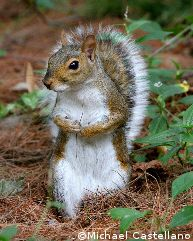 Prof. Acorn?, Photo copyright Michael Castellano